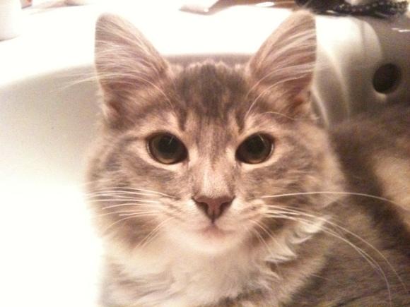 Cat Rolf