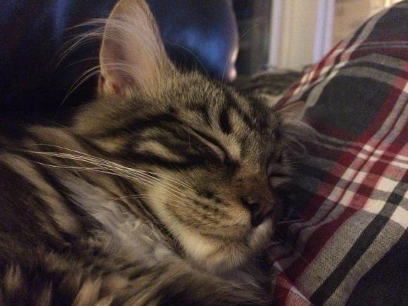 Cat Katt
