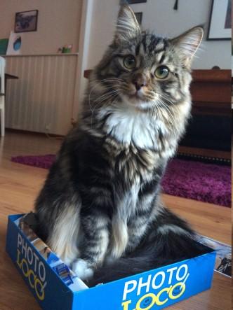 Findus cat
