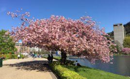 Spring again in Bergen
